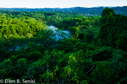 Wide angle view of lush green rainforest trees